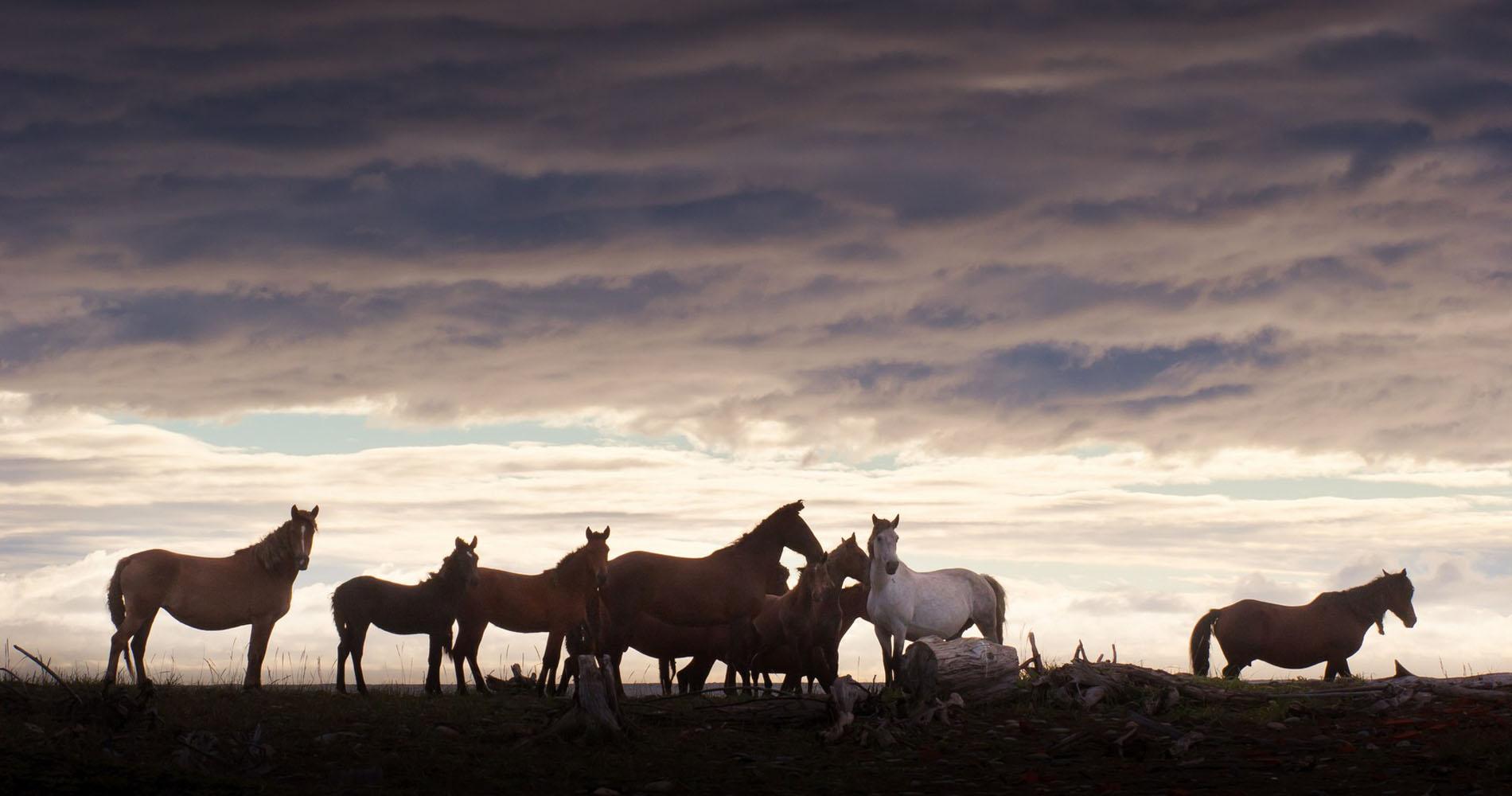 equine2